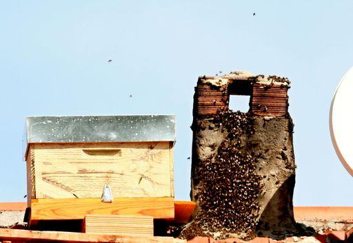 Bienen besetzen unseren Kamin
